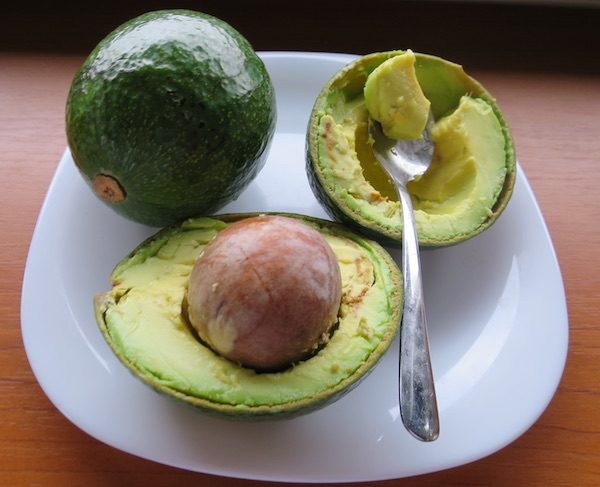 avocado_01BB