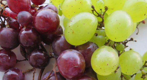 grozdje_01bobebijelocrnoBB